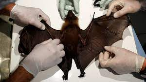Whoa!!! Wuhan scientists, Daszak planned to release coronaviruses into cave bats 18 months before outbreak